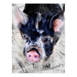 Pequeña postal del cerdo