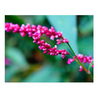 Pequeña postal rosada de las flores