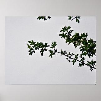 Pequeña rama frondosa verde contra el cielo nublad posters