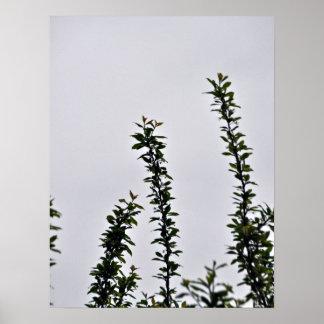 Pequeña rama frondosa verde contra el cielo nublad impresiones
