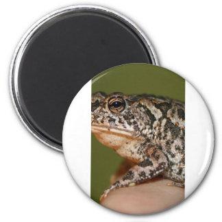Pequeña rana del sapo en el dedo contra puerta ver imán de frigorífico
