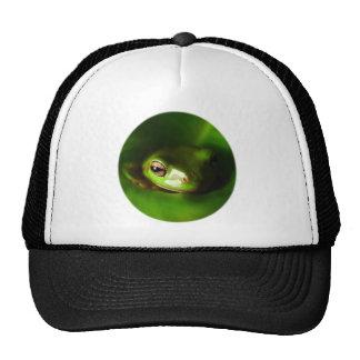 pequeña rana verde en hoja verde gorras de camionero