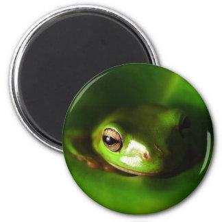 pequeña rana verde en hoja verde imán redondo 5 cm