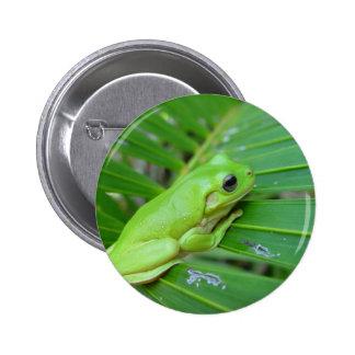 Pequeña rana verde pin redondo de 2 pulgadas