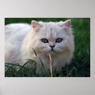 Pequeña reclinación blanca del gatito póster