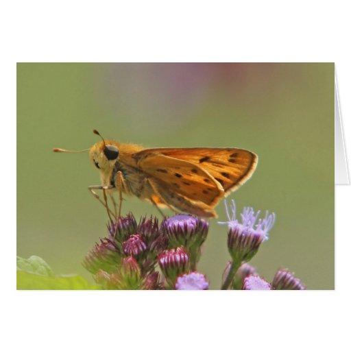 Pequeña tarjeta de la mariposa del capitán 5x7