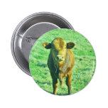 Pequeña vaca de Brown en hierba verde en colores p Pins