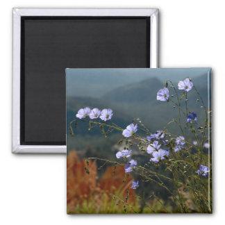 Pequeñas flores alpinas azules imán cuadrado