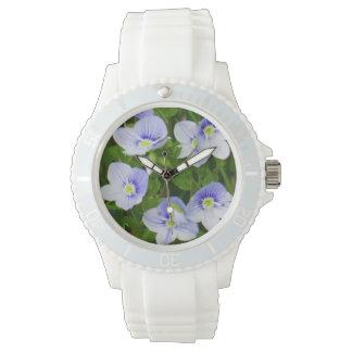 Pequeñas flores azules del reloj