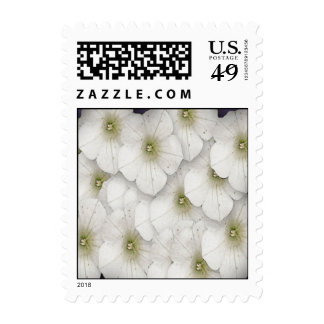 Pequeñas flores blancas envio
