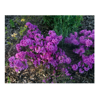 Pequeñas flores de color rosa oscuro postal