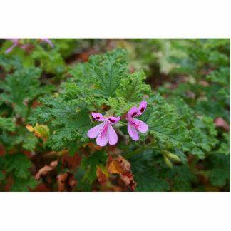 pequeñas flores púrpuras contra la planta verde de escultura fotográfica