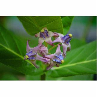 pequeñas flores púrpuras contra las hojas verdes escultura fotografica