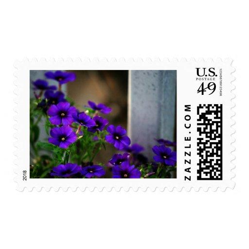 Pequeñas flores púrpuras…. franqueo