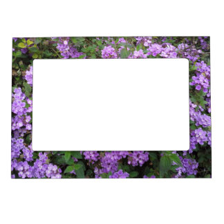 Pequeñas flores púrpuras marcos magnéticos para fotos