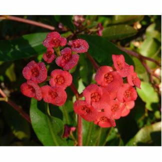 pequeñas flores rojas con la imagen del rocío esculturas fotográficas