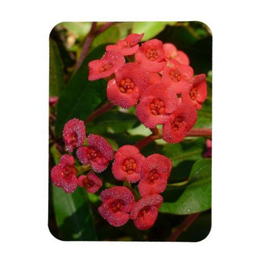 pequeñas flores rojas con la imagen del rocío iman rectangular