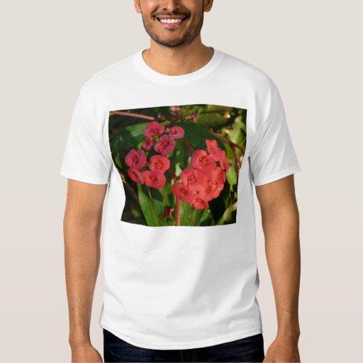pequeñas flores rojas con la imagen del rocío playera