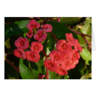 pequeñas flores rojas con la imagen del rocío tarjeta
