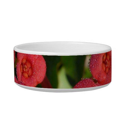pequeñas flores rojas con la imagen del rocío tazón para gato