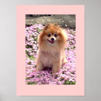 Pequeñas flores rosadas del poster el | Marley Pom