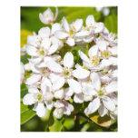 Pequeñas flores salvajes blancas membrete