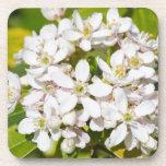 Pequeñas flores salvajes blancas posavasos de bebidas