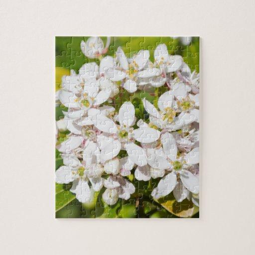 Pequeñas flores salvajes blancas rompecabezas con fotos