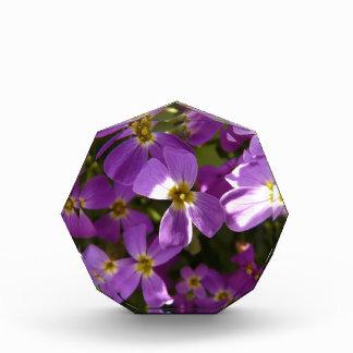Pequeñas flores violetas