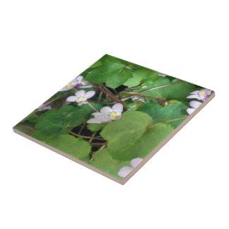 pequeñas flores violetas salvajes bonitas teja