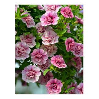 Pequeñas petunias rosadas en primavera tarjetas postales