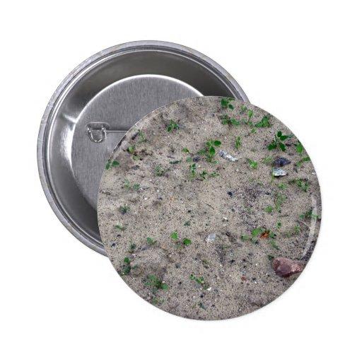 Pequeñas plantas en textura de la arena pins