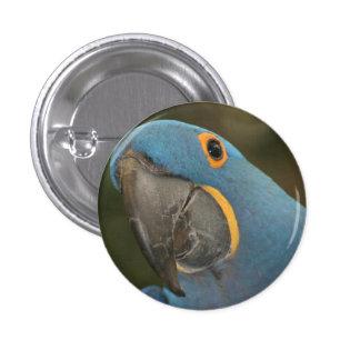 Pequeño botón del Macaw del jacinto Pins
