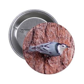 Pequeño botón del pájaro del trepatroncos pin redondo de 2 pulgadas