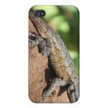Pequeño Brown hermoso y lagarto gris iPhone 4 Cobertura