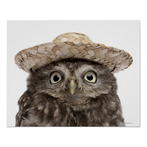 Pequeño búho que lleva un gorra de paja - noctua d poster