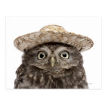 Pequeño búho que lleva un gorra de paja - noctua postal