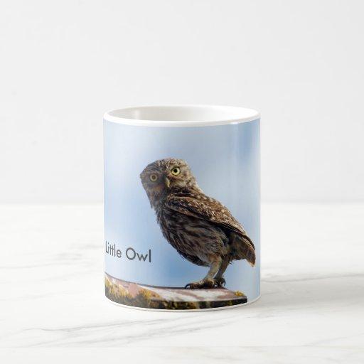 Pequeño búho tazas de café