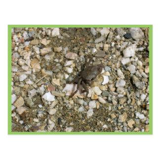Pequeño cangrejo negro en las rocas postales