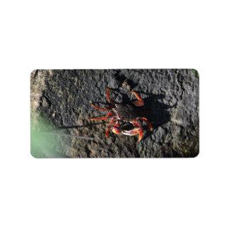pequeño cangrejo rojo en la naturaleza animal de etiquetas de dirección