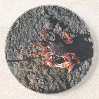 pequeño cangrejo rojo en la naturaleza animal de posavasos para bebidas