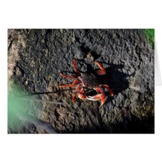 pequeño cangrejo rojo en la naturaleza animal de tarjeta pequeña