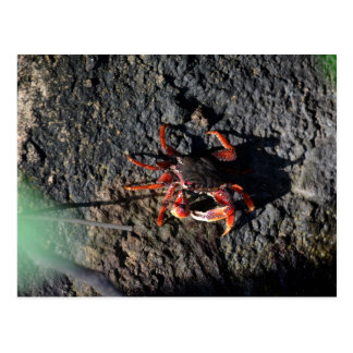 pequeño cangrejo rojo en la naturaleza animal de tarjetas postales