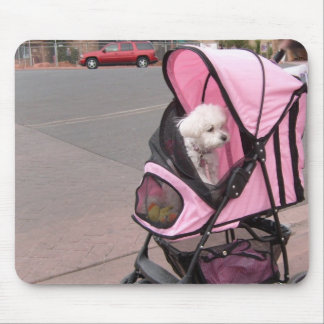 Pequeño caniche lindo en un cochecito del perrito, mousepads