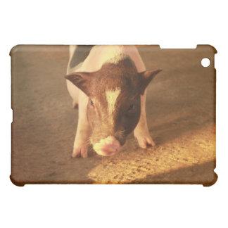 Pequeño cerdo lindo