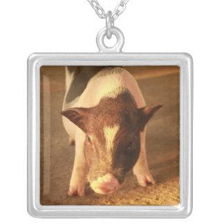 Pequeño cerdo lindo joyerias