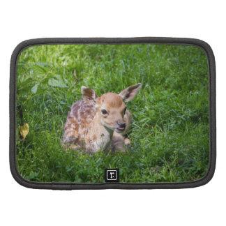 Pequeño cervatillo en la hierba, animal del bebé organizador