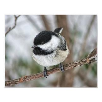 Pequeño Chickadee lindo Fotografías