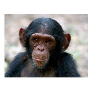 Pequeño chimpancé postal
