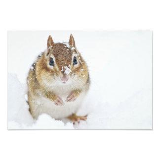 Pequeño Chipmunk lindo en la nieve Arte Fotografico